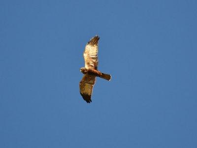Birding Trekking & Nature