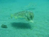 潜水水下海洋动物马拉加
