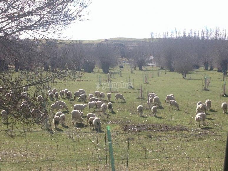 Animales en Segovia
