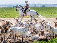 Caballos y ganaderia