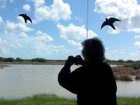 fotos a aves