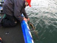 Pesca en el embalse de Cíjara desde barco