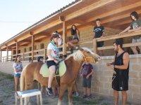 骑在学校农场