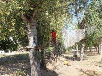 树木之间电路的阵营