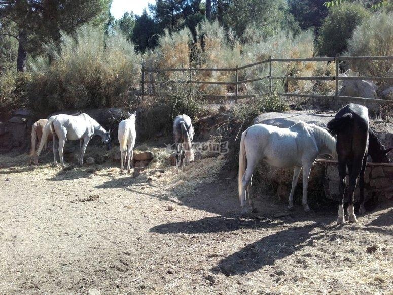Preciosos y simpaticos caballos