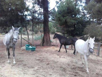Excursión a caballo por el Valle de Iruelas de 2h