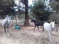 Paseo en caballo en Valle de Iruelas