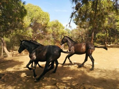 Ruta a caballo en la Broseta nivel iniciación
