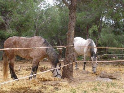 Excursiones a caballo La Torre para experimentados