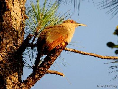 Murcia Birding