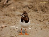 Bienvenidos a Murcia Birding