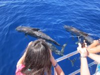 Observation of whales and dolphins
