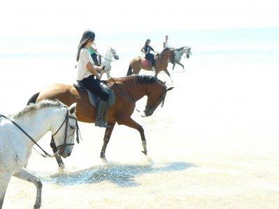Paseo a caballo por Doñana para niños, 1h 30min