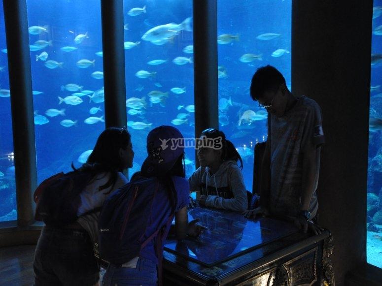 En el acuarium de Coruña