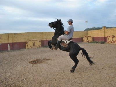 Curso de salto a caballo en Valladolid 4 horas