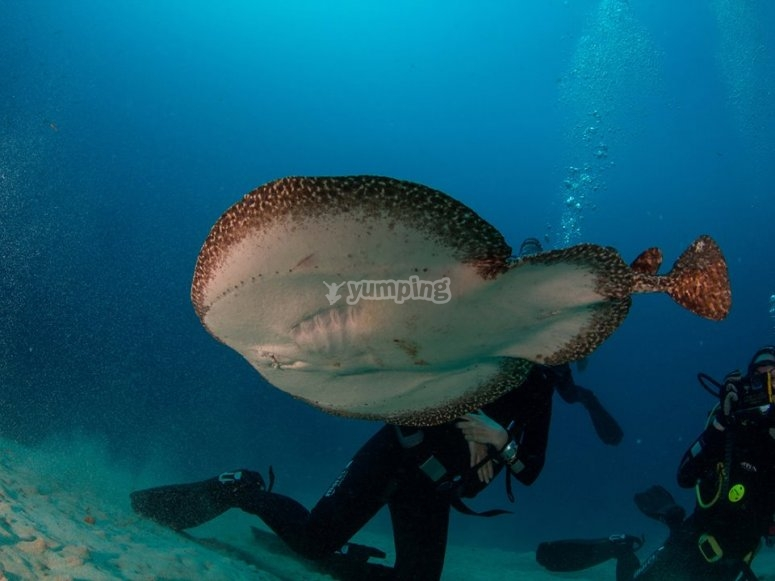 兰萨罗特岛水域的动物