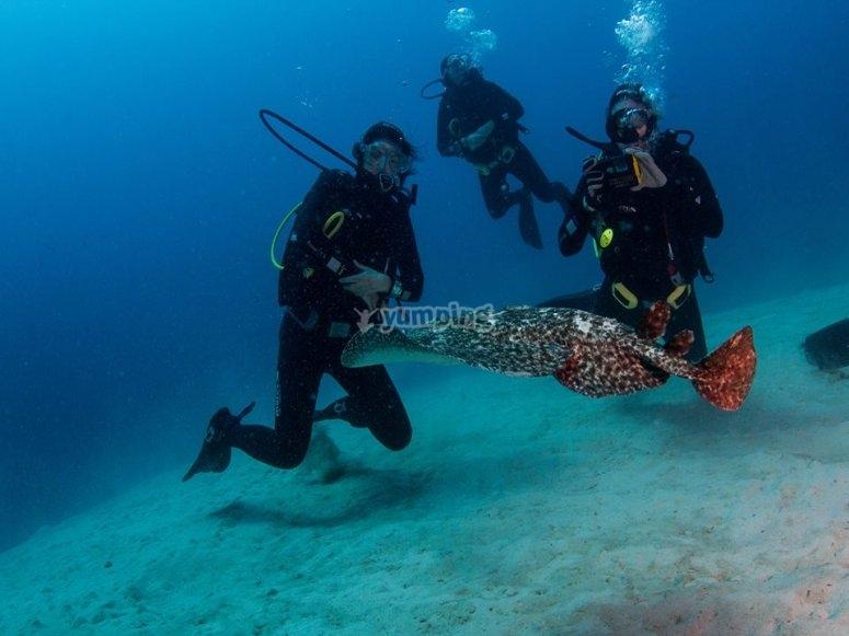 有专业潜水教练的课程