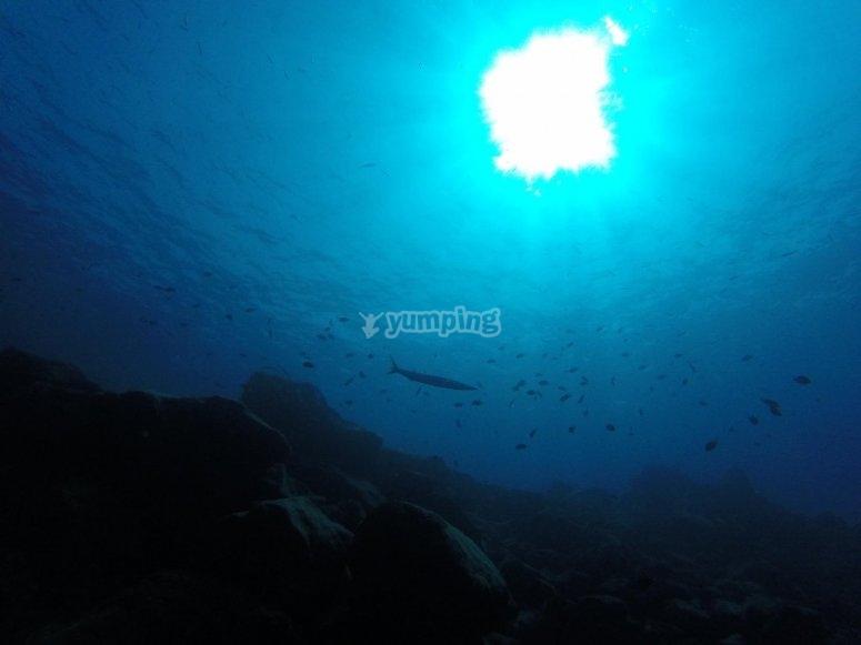 En la inmensidad del mar