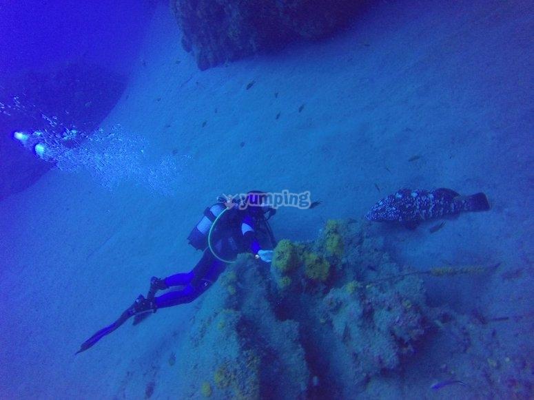 Scuba Diving en las costas de Lanzarote