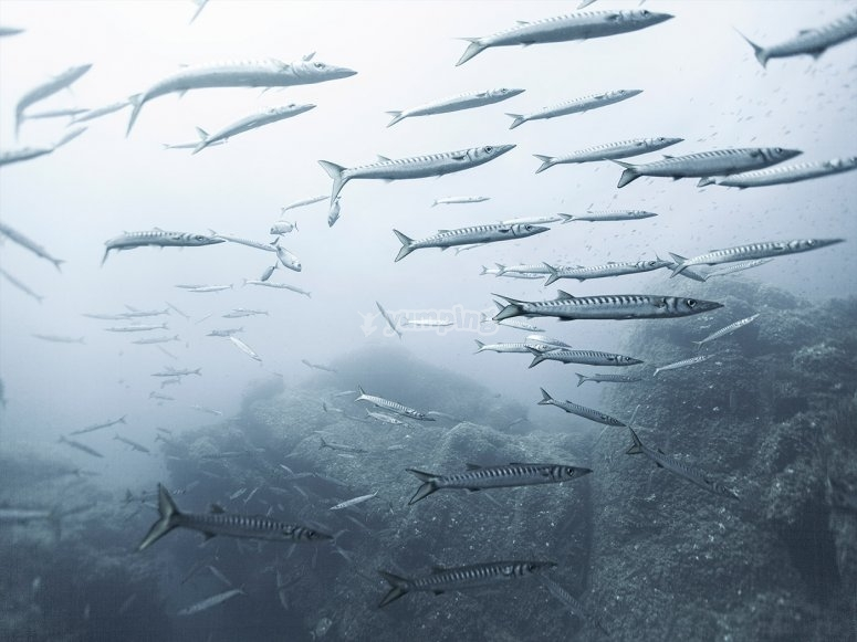 梅诺卡岛高级潜水课程
