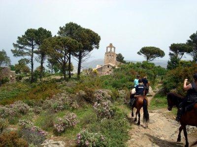 Ruta a caballo por Collserola 1 hora