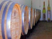 barriles de vino.JPG