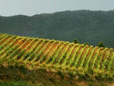 Ruta del Vino