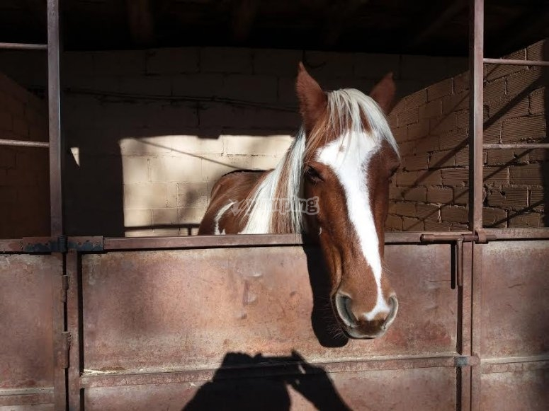 Scatola del cavallo