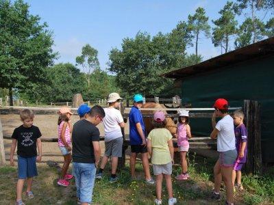 1-day school farm visit for schools + lunch
