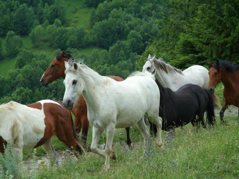 I cavalli in libertà
