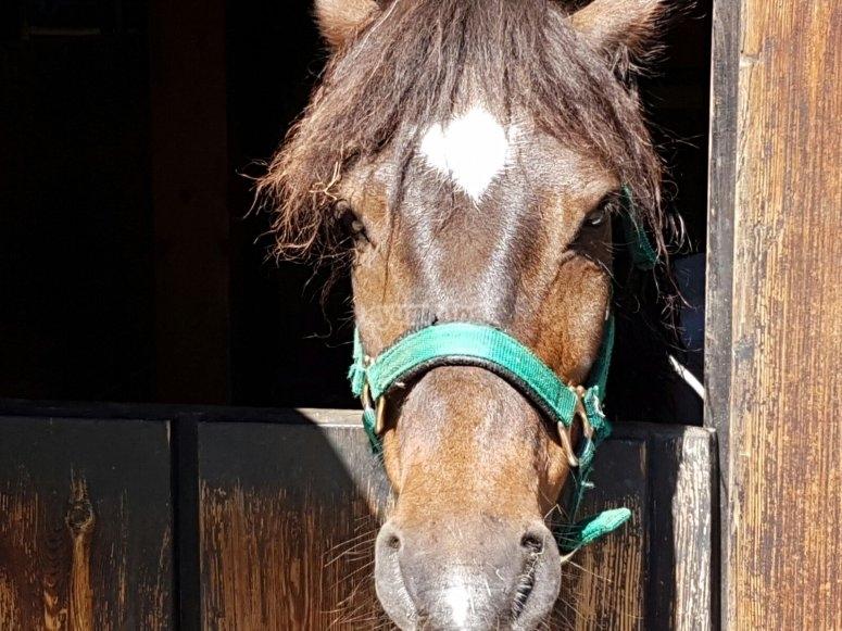 Paseos en pony y a caballo