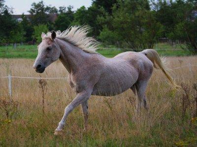 Trascorri la giornata con i cavalli vicino a Madrid