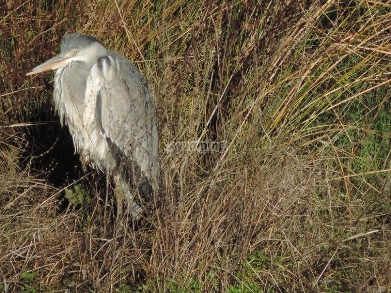 Guardando la varietà di uccelli in Estremadura