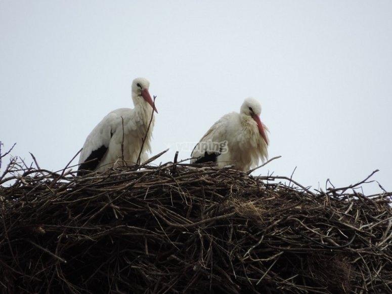 Durante la ruta también veremos aves