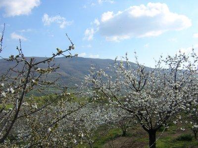 Viaje en 4x4 por el valle del Jerte 8 horas