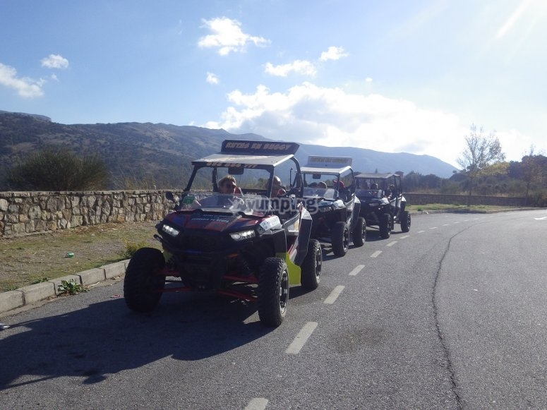 A row of buggies