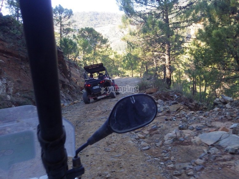 Rear mirror of the buggy