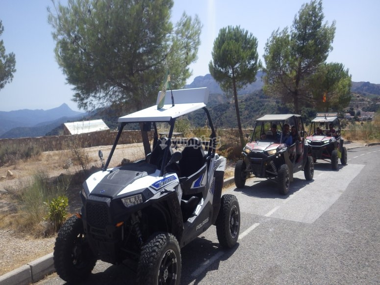 A group of buggies