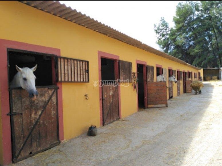 我们的马匹在维修区