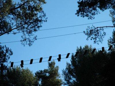 Circuito de arborismo en La Alberca más de 12 años