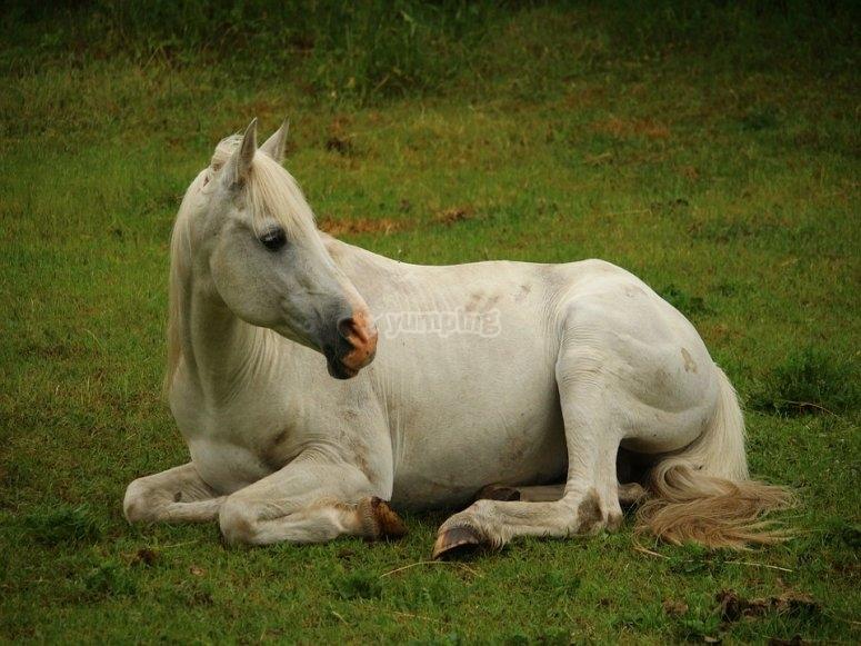 Preciosos y cuidados caballos