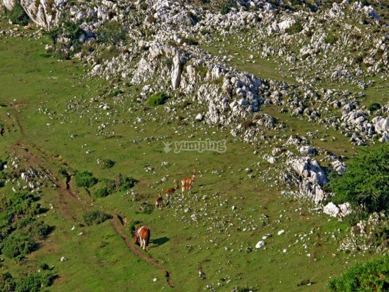 Sierra de Peñamayor