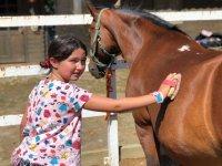 Limpiando al caballo del campamento