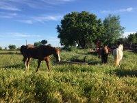 horses camp montellano