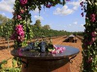 Degustación de vinos al aire libre