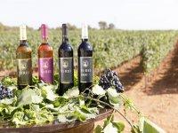 Nuestra gama de vinos