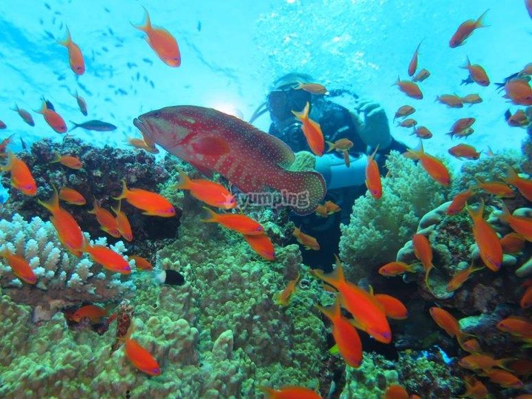 开放水域潜水