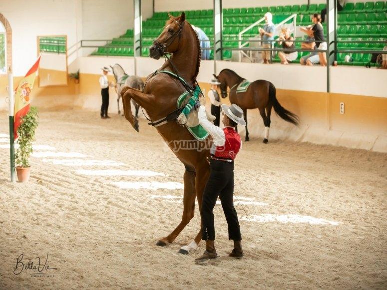 Bailando sevillanas con el caballo