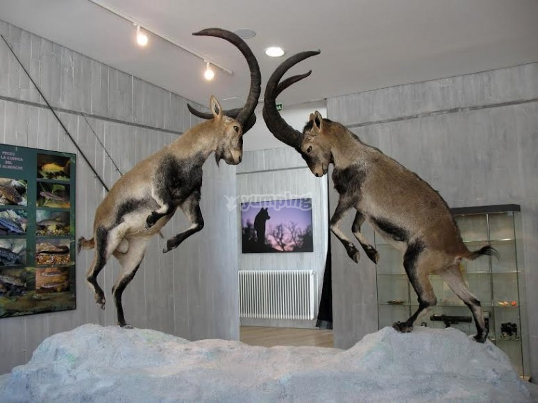 Replicas de cabras luchando