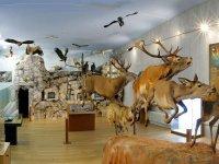 Entrada al museo de animales